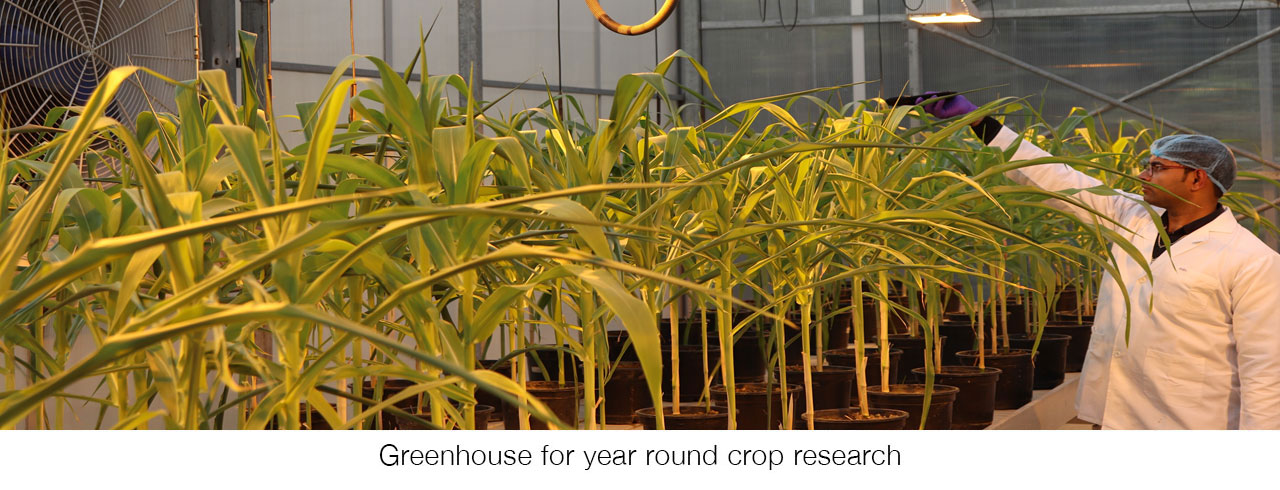 Greenhouse manufactures