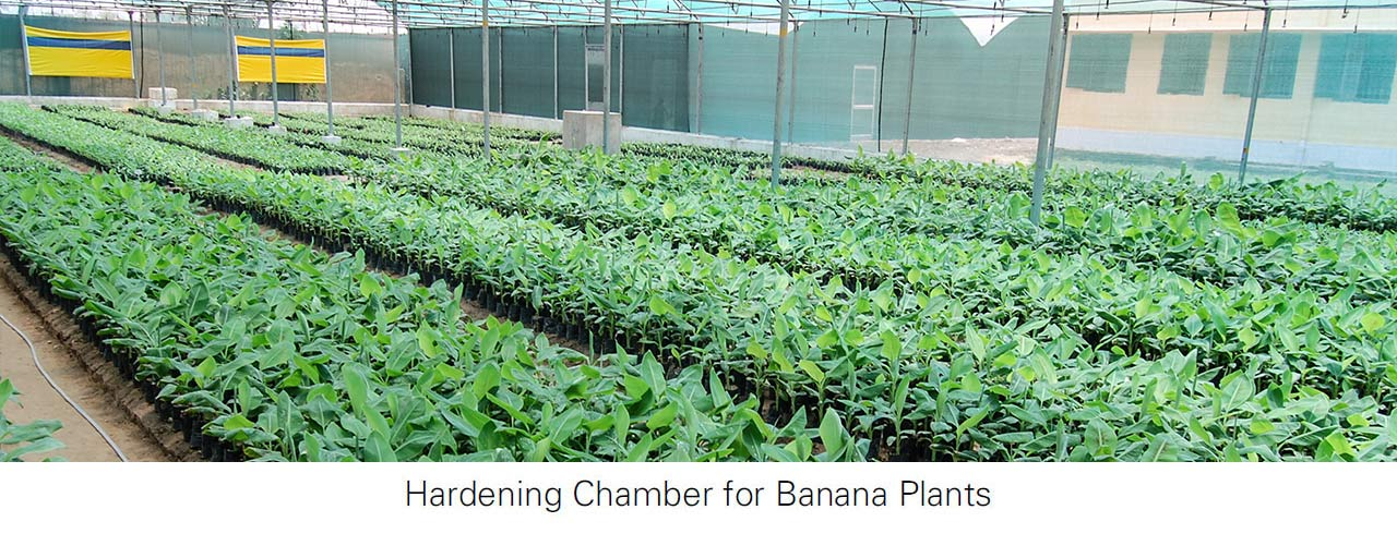 Saveer Greenhouse manufacture